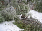 The Ice Storm of '05